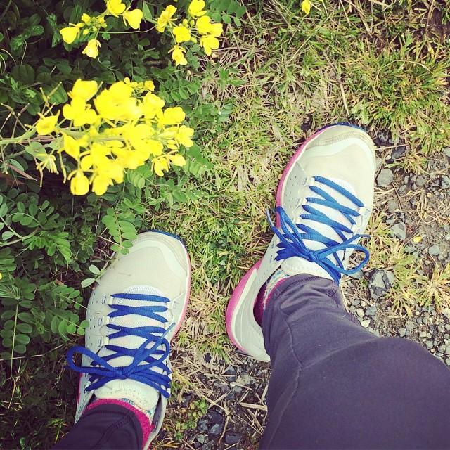 ランニングトレーニング再会です。4月に参加するフルマラソンのこと 忘れてました。菜の花はキレイしでたわ️